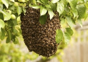 bee-hive-removal